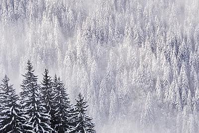 photo montagne alpes belledonne randonnée raquettes ski sapins