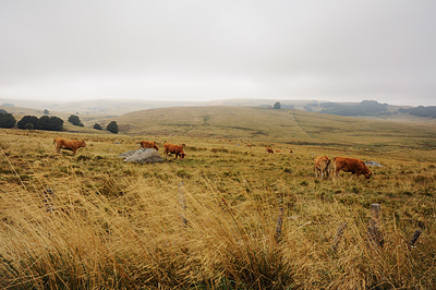 photo aubrac cantal lozère