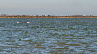 photo camargue flamants