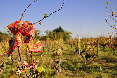 photo dijon marsannay route des vins vignes