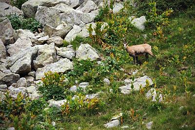 photo montagne alpes randonnée GR5 GR52 mercantour lac fous chamois