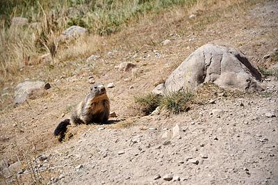 photo montagne alpes randonnée GR5 mercantour larche lauzanier vallon val fourane marmotte