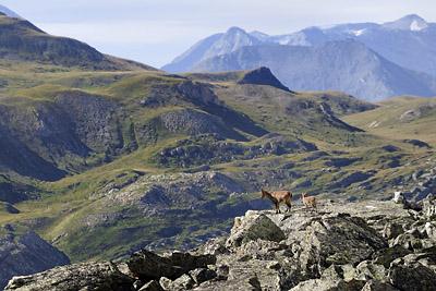 photo montagne alpes randonnée GR5 vanoise bouquetin