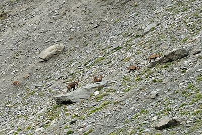 photo montagne alpes randonnée GR5 vanoise col chaviere bouquetin