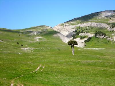 photo montagne alpes randonnée Vercors Grand Veymont arbre taillé