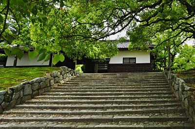 photo japon kyoto Shoren-in camphrier