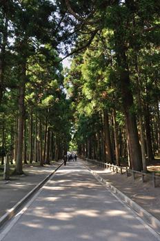 japon matsushima Zuigan-ji allée