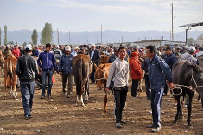 photo voyage asie centrale kirghizstan kirghizistan kirghizie kyrgyzstan karakol marche bestiaux