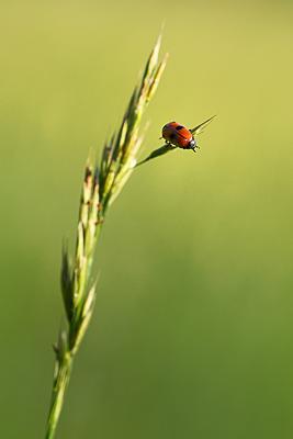 photo proxy proxyphotographie macro macrophotographie insecte