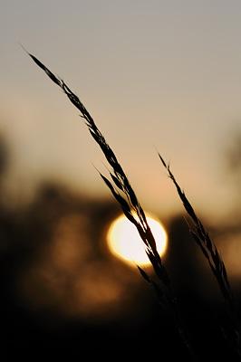 photo proxy proxyphotographie macro macrophotographie plantes coucher soleil