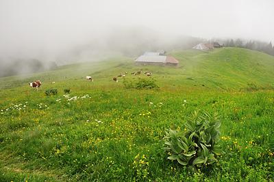 photo montagne randonnée alpes bauges mont colombier chalets fullie