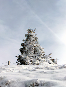 photo montagne alpes randonnée Mont Géroux Mont Joux sapin neige