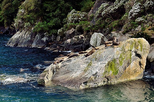 photo voyage nouvelle zelande te anau fiordland milford sound