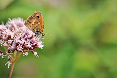 photo pilat macro macrophotographie proxy insecte papillon