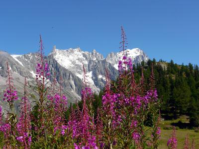 photo montagne alpes randonnée tour du mont blanc tmb kora col chécroui italie