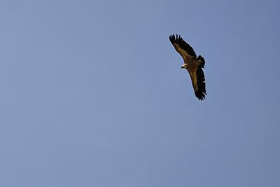 photo montagne alpes randonnée tour baronnies vautour