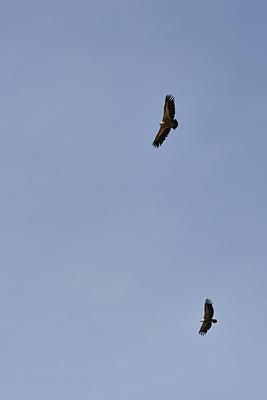 photo montagne alpes randonnée tour baronnies vautours