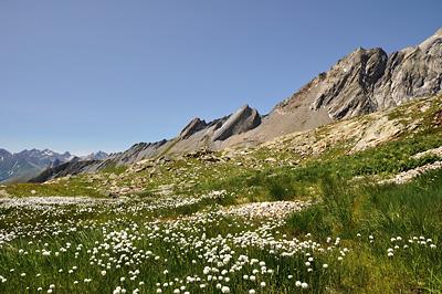 photo montagne alpes beaufortain mont blanc randonnée vallee glaciers linaigrettes