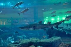 Aquarium du Dubai Mall